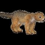 Arctic Ground Squirrel (Holden)
