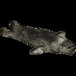 Baikal Seal (Zerosvalmont)