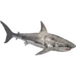 White Shark (Dedennedillo)