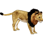 African Lion (Ultamateterex2)/Version 2