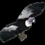 Andean Condor (Bunyupy & Iguano)