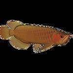 Asian Arowana (Whalebite)