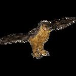 Australian Masked Owl (Tamara Henson)