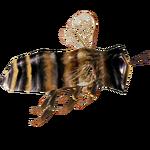 Ambient Western Honey Bee (Ulquiorra)
