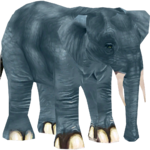 African Forest Elephant (Colonel Swampert & Mjmannella)