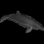 Arnoux's Beaked Whale (Terrena Laxamentum)