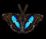 Ambient Turquoise Emperor (Zoker)