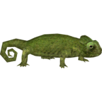 Common Chameleon (Hispa Designs)