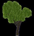 Sal Tree (Aurora Designs)