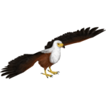 African Fish Eagle (LilyValley)
