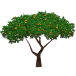 Orange Tree (Worldwide Designers United)