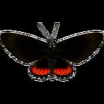 Ambient Crimson-banded Black (MasterChief123)