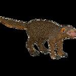 Dwarf Mongoose (DutchDesigns)