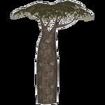 Grandidier's Baobab (ZTABC Team)