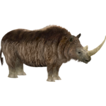Woolly Rhinoceros (Lights)