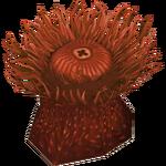 Beadlet Anemone (HENDRIX)