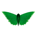 Ambient Common Nettletree Butterfly (Tamara Henson)