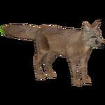Corsac Fox (Athamus)