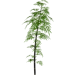 Black Bamboo (Demon Hunter)