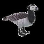 Barnacle Goose (Caviar)