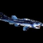 Beluga Sturgeon (Artifex)