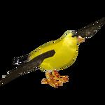 American Goldfinch (Feral Designs)