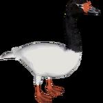 Black-necked Swan (DutchDesigns)