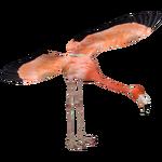 Caribbean Flamingo (MasterChief123)
