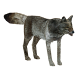Coyote (Hispa Designs)