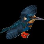 Bismarck Kingfisher (Jose Antonio)