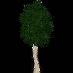 Ellipticleaf Papala (Artifex)