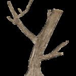 Dead Tree Logs (Cat & Juicy)