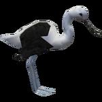 Andean Avocet (Deinonychus 110)