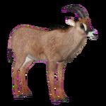 Cotton's Roan Antelope (Tamara Henson)