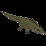 American Alligator (Riverbreeze)
