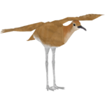 Burchell's Courser (LilyValley)
