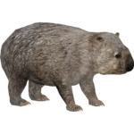 Common Wombat (Zerosvalmont)