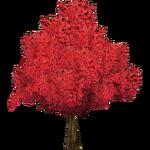 Japanese Maple (The Restorers)