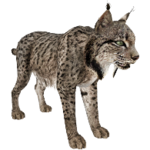 Spanish Lynx (Aurora Designs)