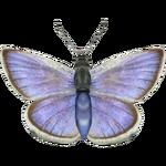 Ambient Xerces Blue (Whalebite)