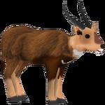 Bushbuck (Sneke Bite)