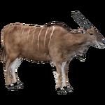 Common Eland (ZTABC Team)