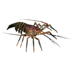 Ambient Rapa Nui Spiny Lobster (Whalebite)