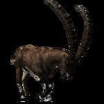 Alpine Ibex (Aurora Designs)