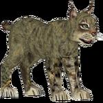 European Wild Cat (Zoo Admin Design Team)