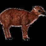 Bate's Pygmy Antelope (Zoo Tycooner FR)