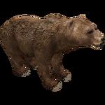 Eurasian Brown Bear (ZTABC Team)