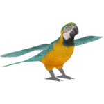 Blue-and-yellow Macaw (Maks)
