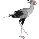 Secretary Bird (Aurora Designs)