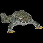 Canadian Toad (Tamara Henson)